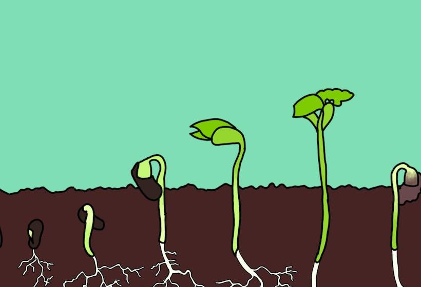 Seed Gardener